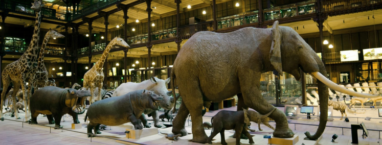 muséum d histoire naturelle
