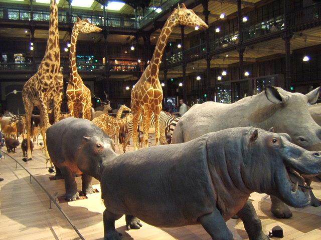 Grande_galerie_evolution_-_musee_histoire_naturelle.JPG